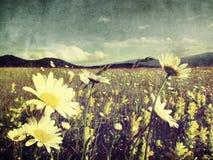 White spring old flower background Stock Image