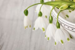 White Spring Snowflake Still Life stock photography