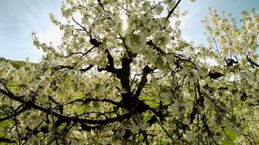 White spring trees plants nature background summertime aerial view stock video footage