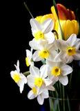 White springtime daffodil flower Royalty Free Stock Image