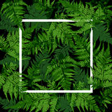 White square frame on tropical leaves, fern plant vector. Illustration Stock Images