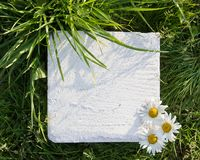 White square stone block with three chamomiles on green grass Stock Image