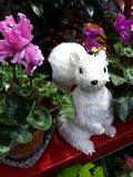 White Squirrel in Florist Shop Royalty Free Stock Images