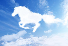 White stallion Stock Photos