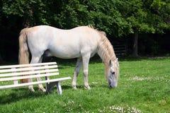 White stallion and bench Stock Photos