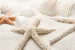 White Starfish royalty free stock photography