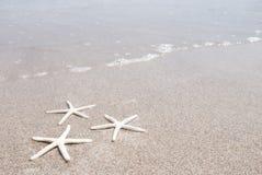 White starfish Royalty Free Stock Photo