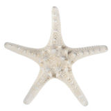 White starfish Stock Image
