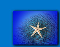 White starfish Stock Photo
