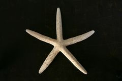 White starfish on brown chest Stock Photography