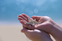 White starfish in hand with blue background Stock Photo