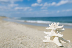 White starfish with ocean, beach, sky and seascape Royalty Free Stock Photo