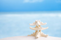 White starfish with ocean, beach, sky and seascape Stock Photo