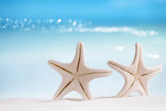 White starfish with ocean, beach, sky and seascape. Shallow dof Royalty Free Stock Photos