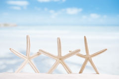 White starfish with ocean, boat, white sand beach, sky and seasc Stock Photography