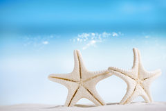 White starfish with ocean, white sand beach, sky and seascape Stock Photos