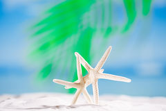 White starfish with ocean, on white sand beach Royalty Free Stock Images