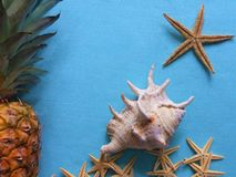 White starfish with a  pineapple stock photo