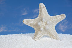 White Starfish And Sand With Blue Sky Background. White Starfish And Sand With Blue Sky and Clouds In Background Royalty Free Stock Photos