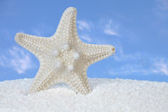 White Starfish And Sand With Blue Sky Background. White Starfish And Sand With Blue Sky  and Clouds In Background Royalty Free Stock Image