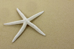 White starfish on a sandy beach. Close up. Stock Image