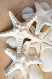 White Starfish. Starfish or sea stars are star-shaped echinoderms belonging to the class Asteroidea. Common usage frequently finds these names being also applied stock photography