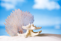 White starfish and seafan Stock Photos
