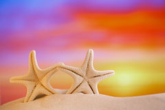 White starfish with sunrise sky on white sand beach Stock Image