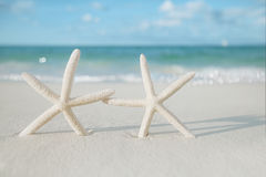 White starfish on white sand beach, with ocean sky and seascape Stock Photography