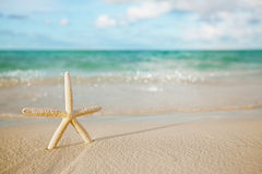 White starfish on white sand beach, with ocean sky and seascape Royalty Free Stock Photography