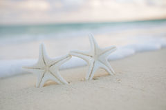 White starfish on white sand beach, with ocean sky and seascape Stock Photo