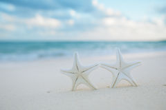 White starfish on white sand beach, with ocean sky and seascape Stock Image