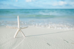 White starfish on white sand beach, with ocean sky and seascape Royalty Free Stock Image