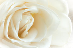 White steg Fotografering för Bildbyråer
