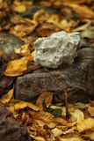 White stone lying on a dark stone on autumn leaves Stock Images