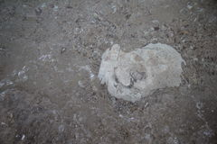 White stone under the see Royalty Free Stock Photo