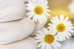 White stones and daisies. Restful image of white stones and daisies Royalty Free Stock Photography