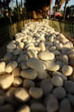 White stones in a metal container Royalty Free Stock Photo