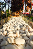White stones in a metal container Stock Image
