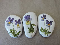 White stones with pansy flowers Stock Images