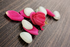 White stones with rose petals Stock Photo