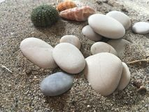 White stones sea urchin adn shells on the sand. Holiday vacation summer background marine world stock photography