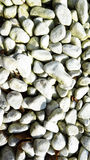 White stones with smooth surface. In garden Stock Photos