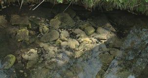 White stones underneath the water 4K FS700 Odyssey 7Q. White stones underneath the clear water from a spring 4K FS700 Odyssey 7Q stock video footage
