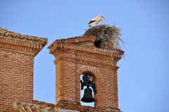 White stork on a belfry, Alcala de Henares, Madrid (Spain) Stock Images