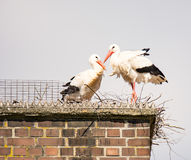 White stork couple in their nest on a chimney Royalty Free Stock Photography