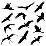 White stork in flight. Silhouettes Stock Photo