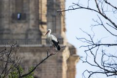 White stork in front of cathedral royalty free stock image