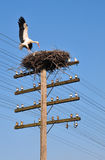 A white stork goes back into a nest Stock Photography