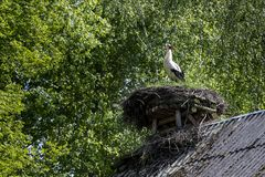 White stork in his nest. On the toop of the building roof, Podlasie, Poland Royalty Free Stock Images